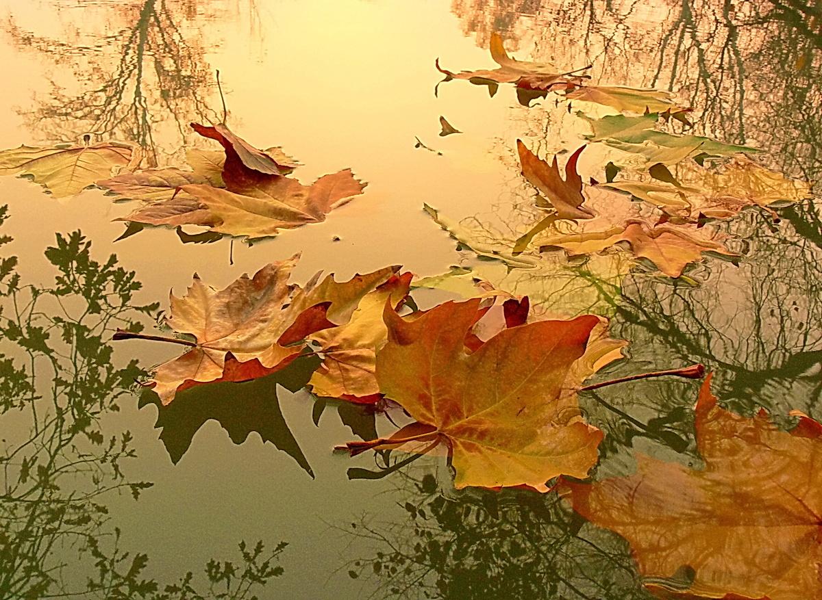 Картинка осень листопад анимация, открытка февраля своими