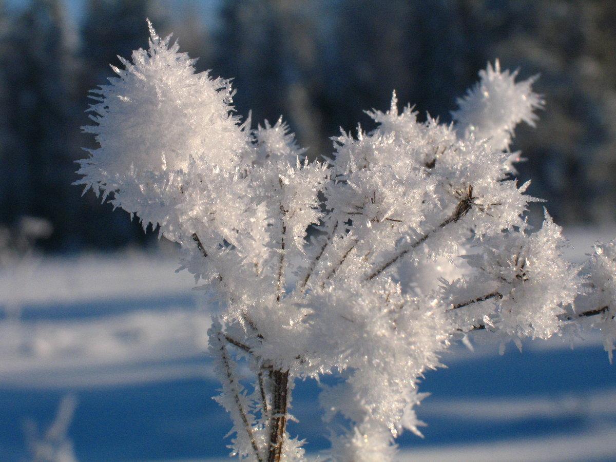 Фото цветов зимой
