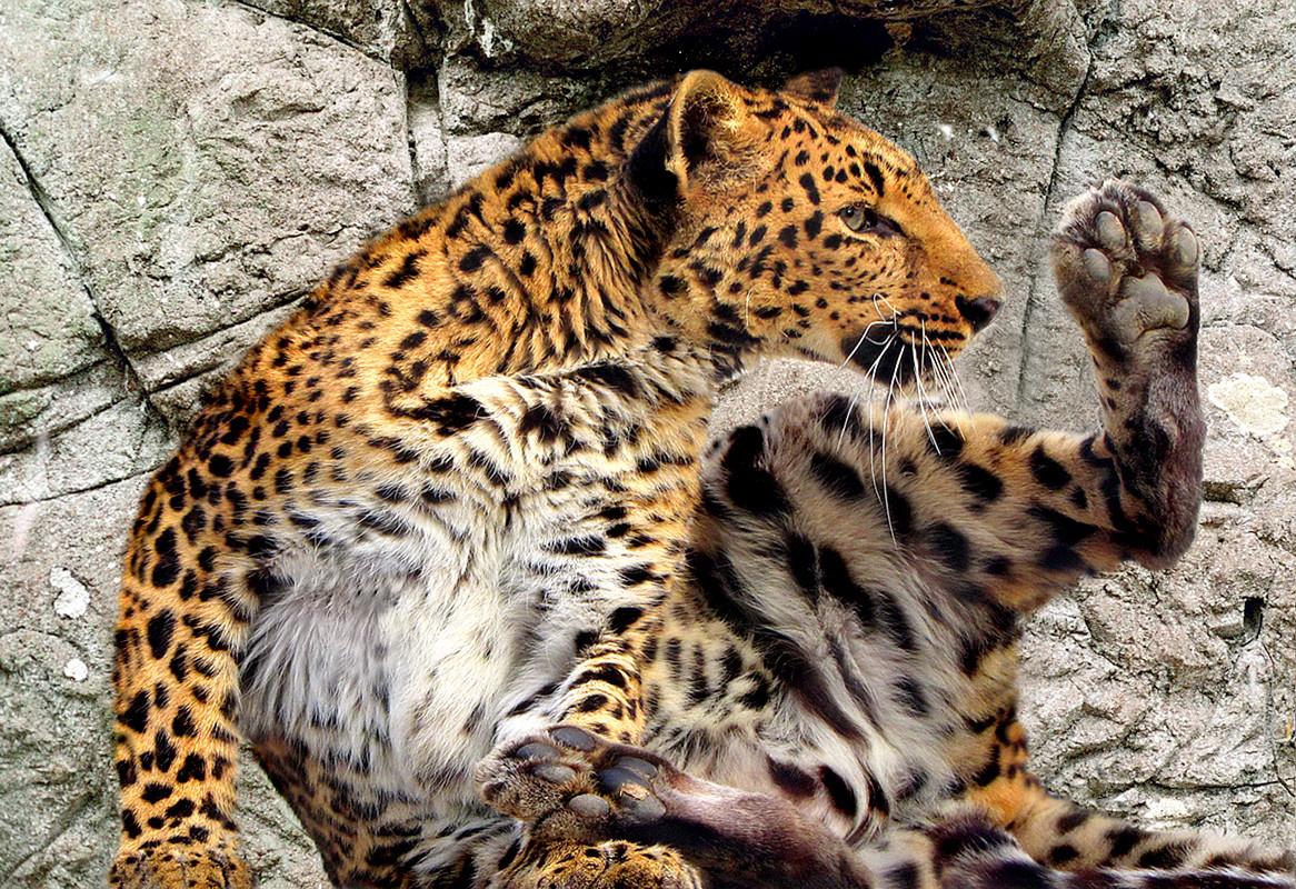 собрали грация животных фото данном разделе представлены