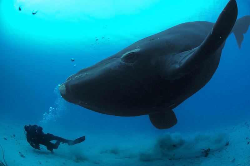 Голубой кит картинки