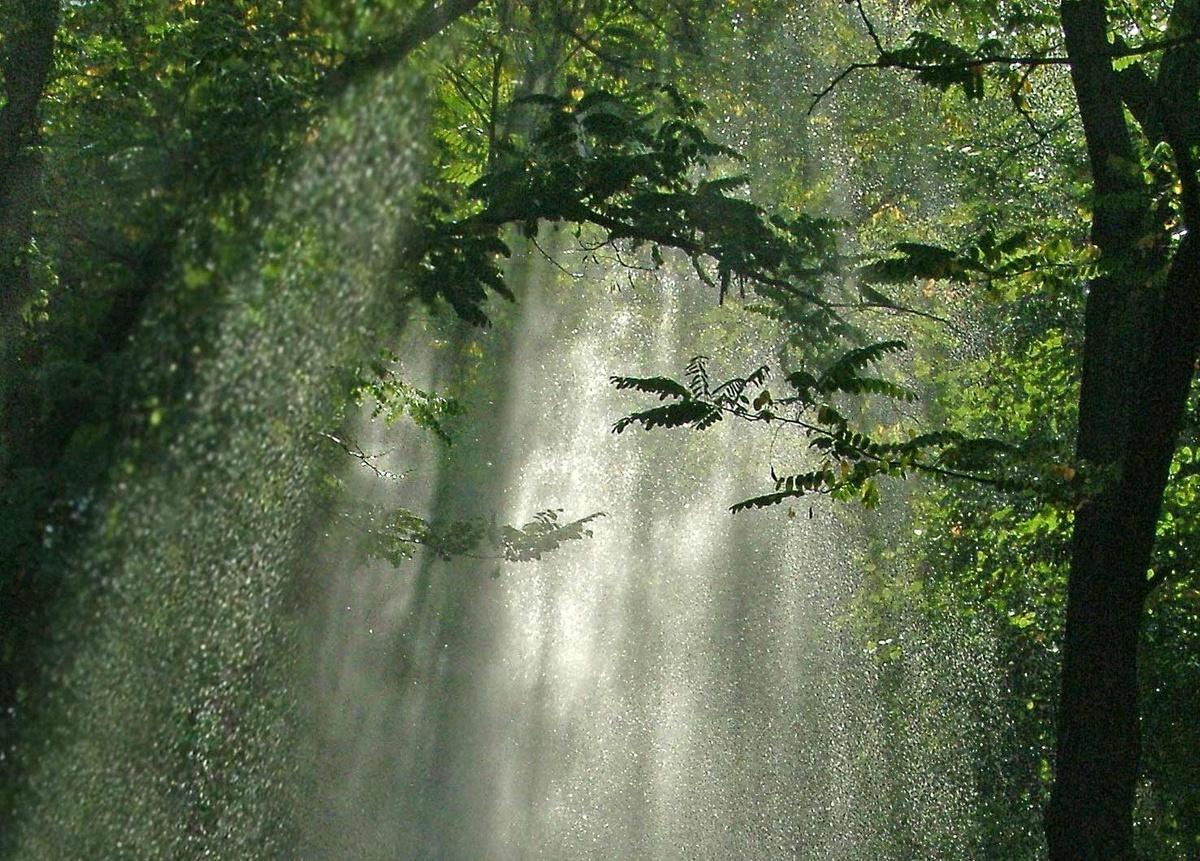старые стены картинки идет дождь в лесу стремительно благоустраивали