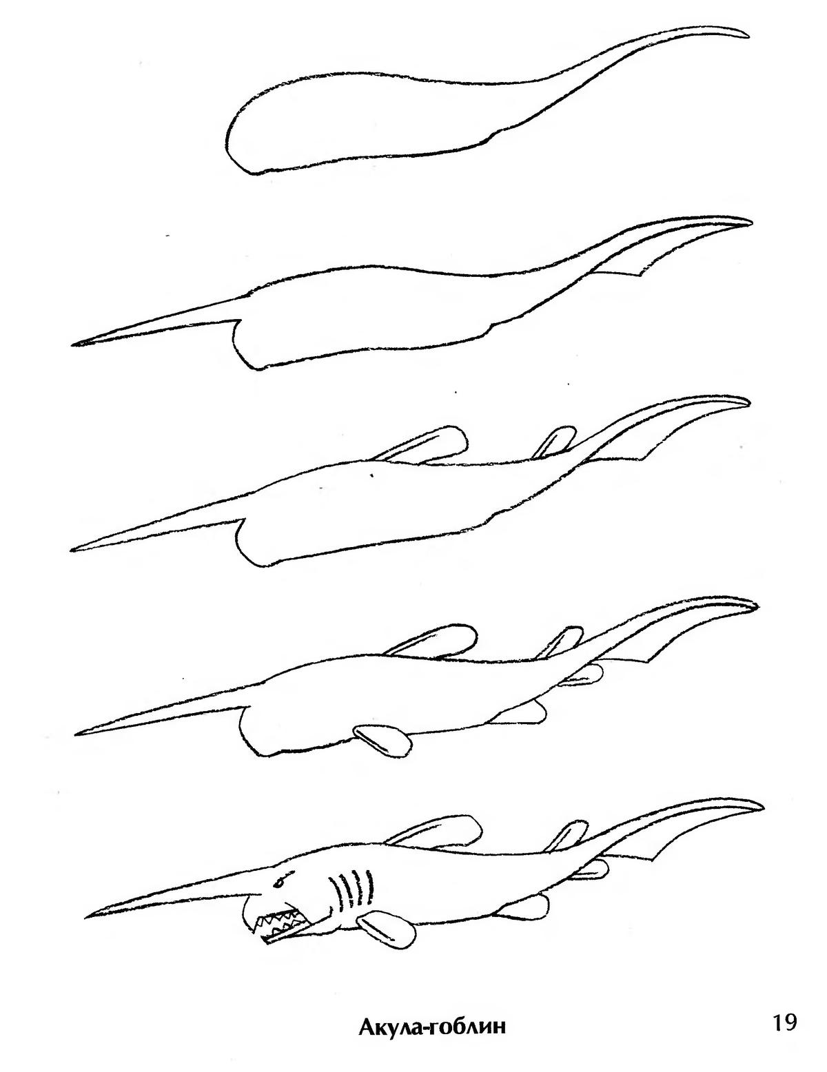 картинки как нарисовать акулу карандашом поэтапно каждом случае были