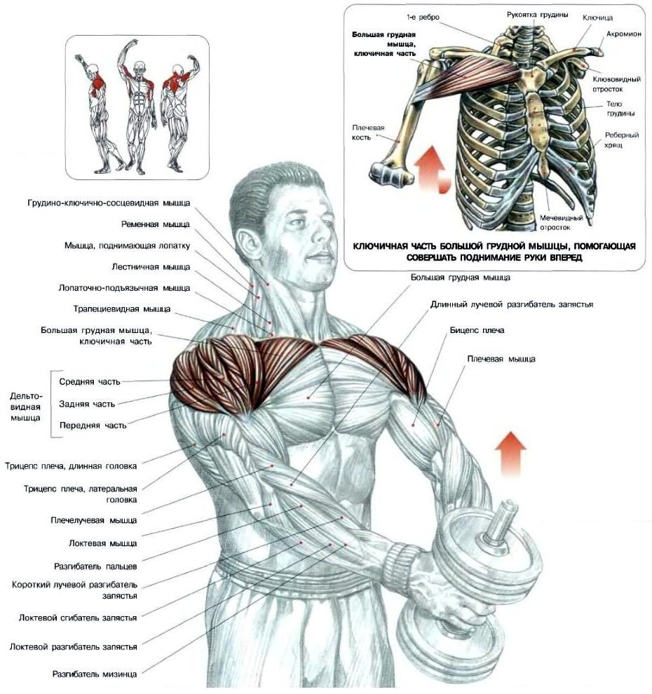 Картинки для как качаются мышцы