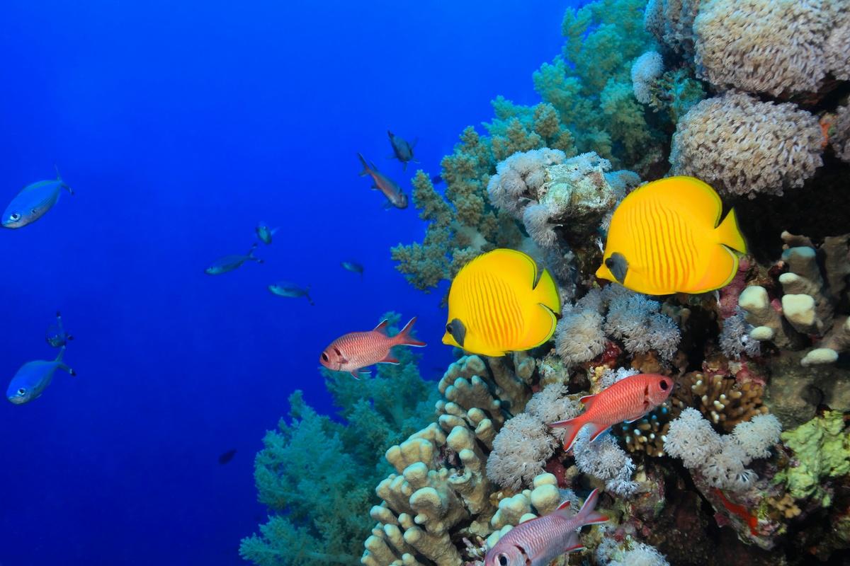 натискат кат фото подводного мира так