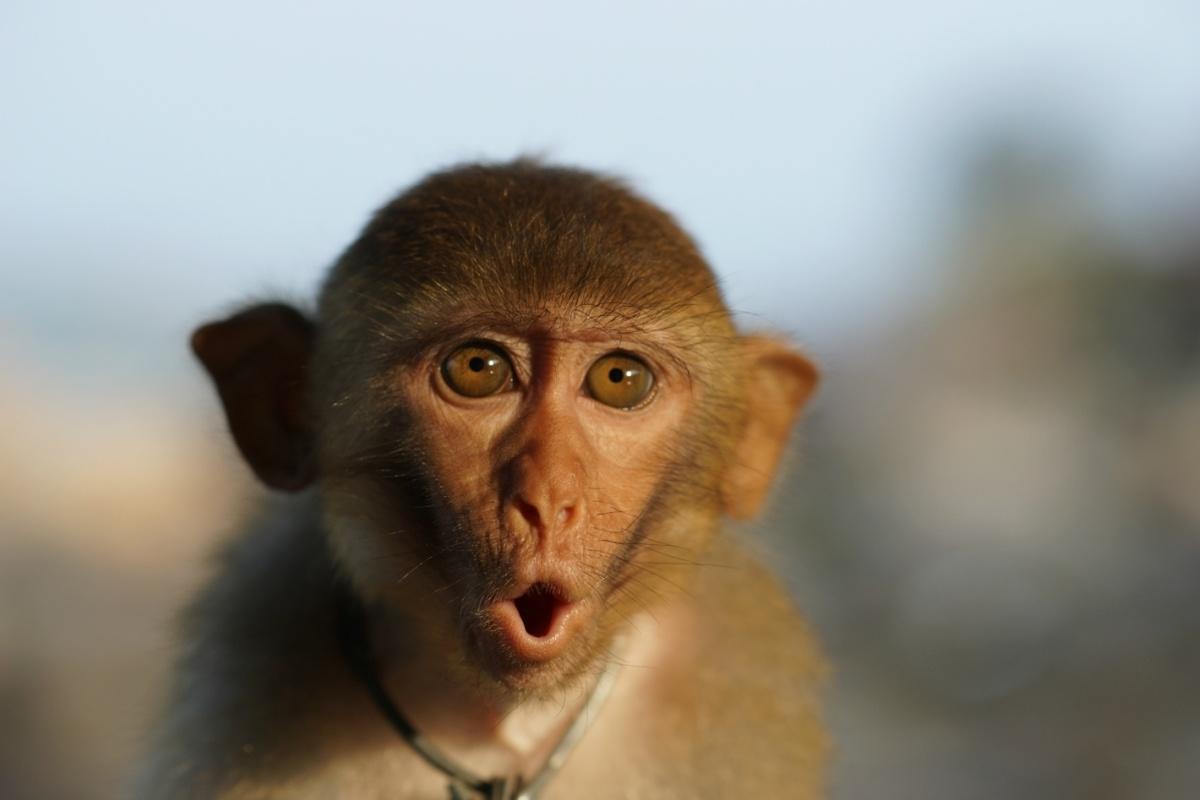 конечно смешные эмоции животных фото этого можно переходить