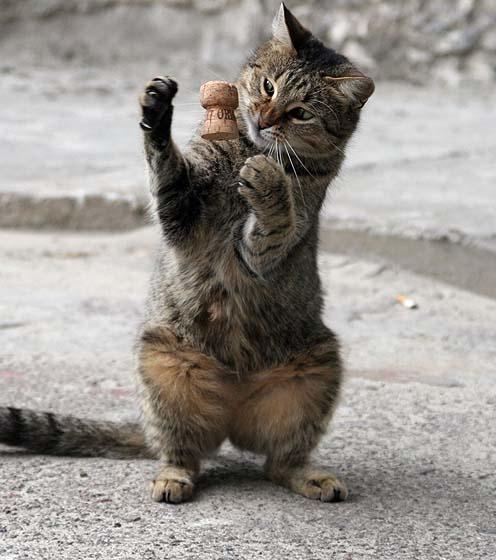 Поздравление, смешные картинки с надписями без котов