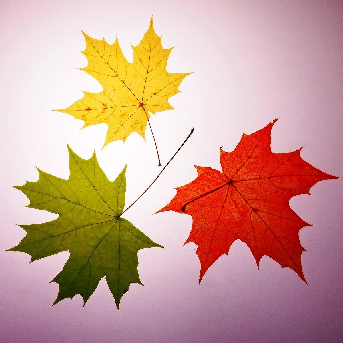 нас когда-то картинки про листья признался
