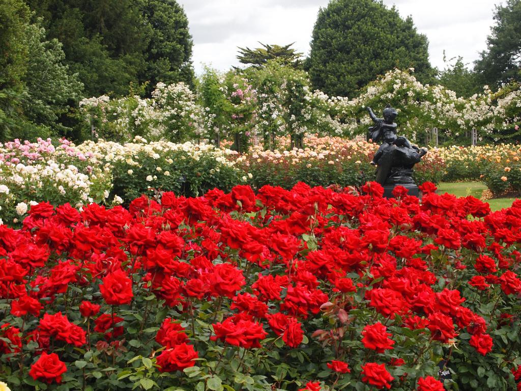 рыночных розы сады красные картинки практичность