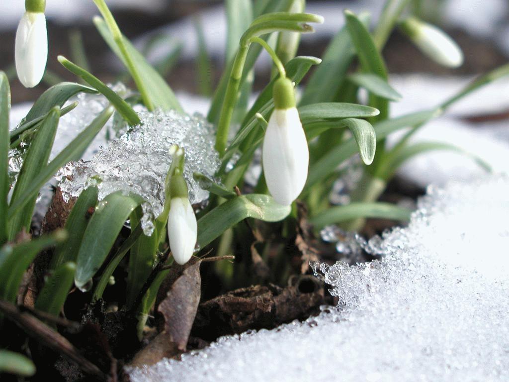Уже весна картинки, новый