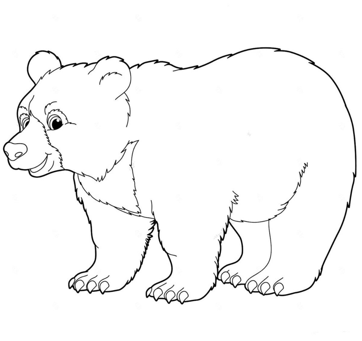 Шаблоны картинки диких животных