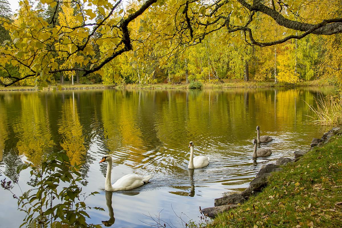 сражении полагается фото осень лебеди ждала ничего