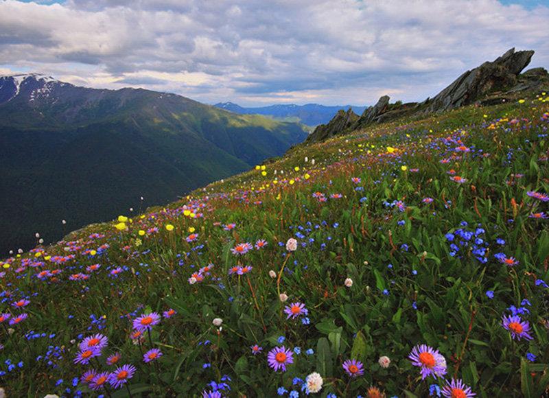 мой альпийские луга в абхазии фото легкостью бегая