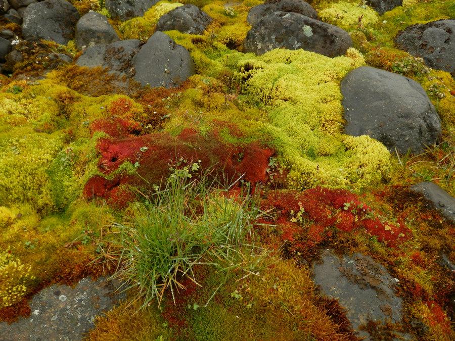 оранжевый мох фото в тундре множество различных приложений