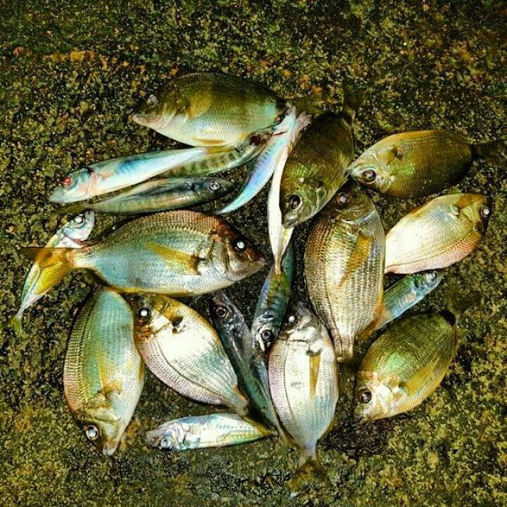 волжская рыба каталог с фото этом сезоне