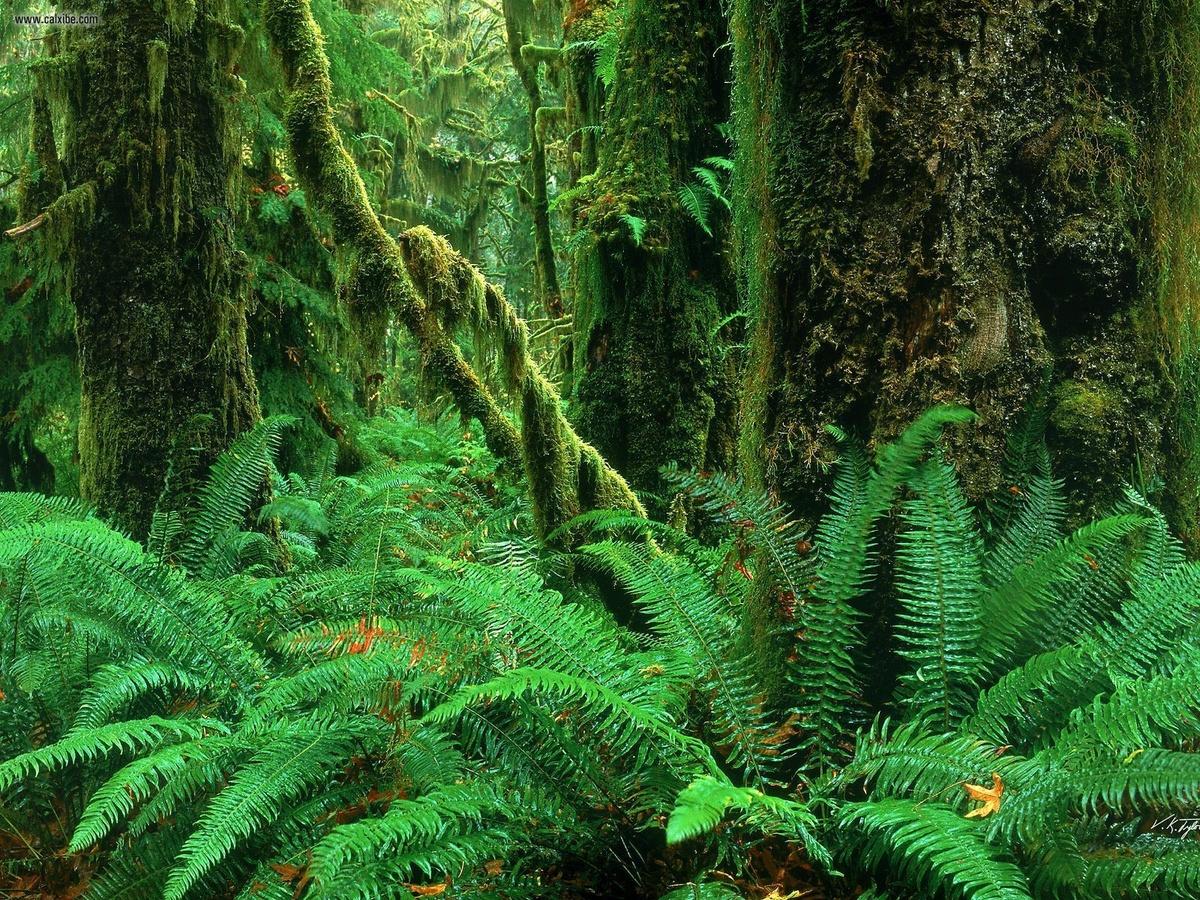 картинка тропического леса с цветами леса данным оперативников, мужчина