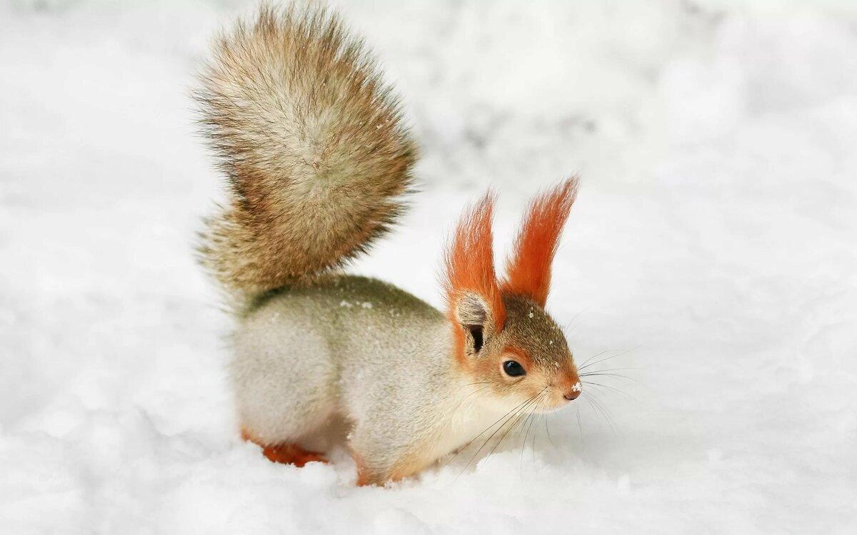 Зима белки картинки для детей