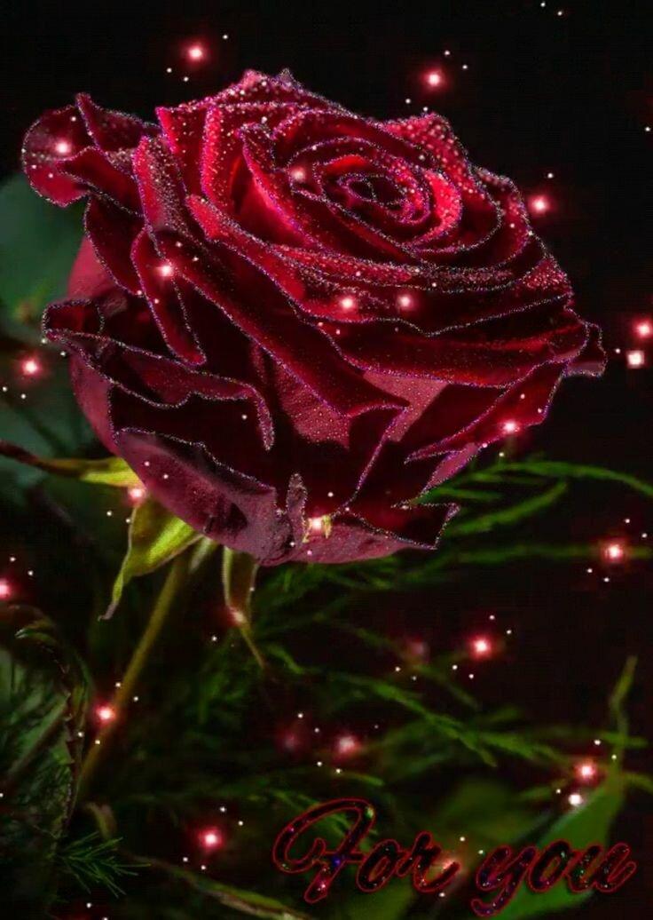 Красивые картинки анимации цветы
