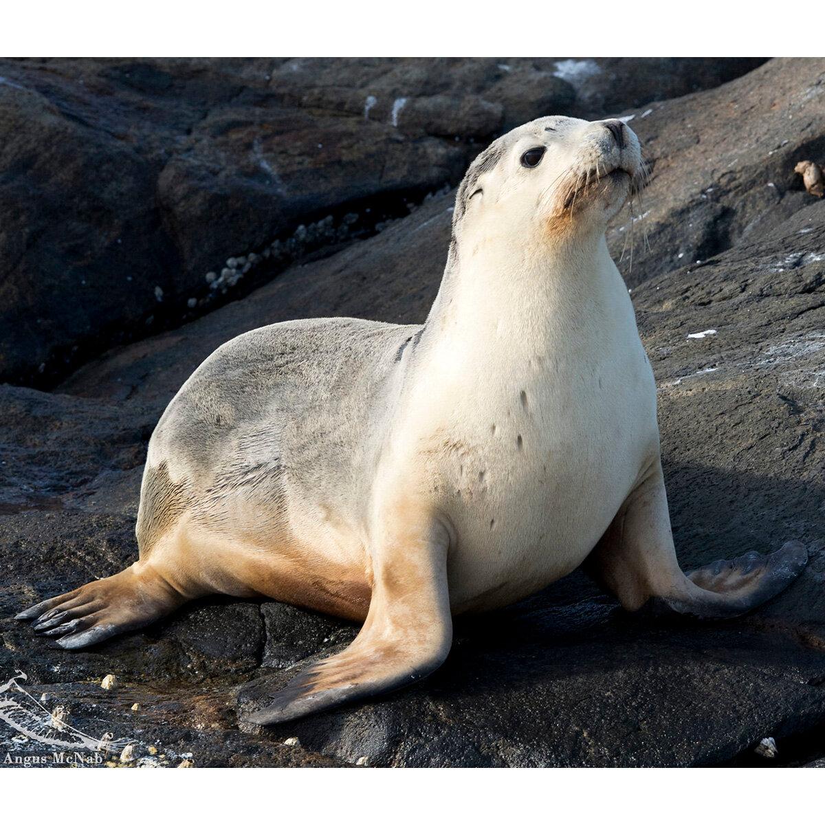 проблемы можно, ушастые тюлени фото птиц