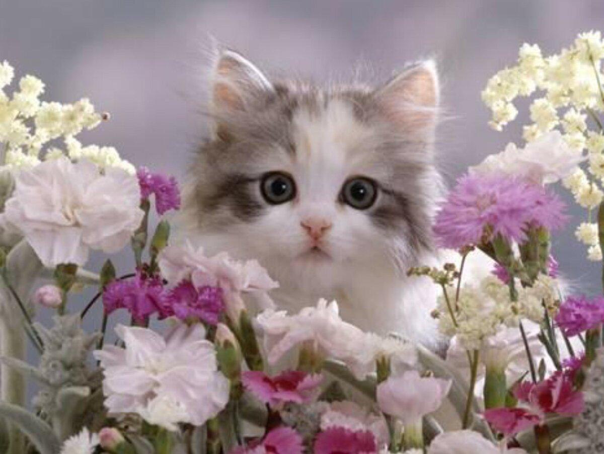 Открытки с кошечками-цветами