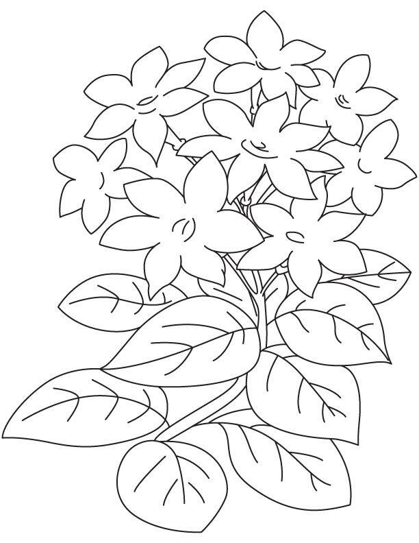никих программ картинки для раскрашивания цветок жасмин оказалось, такой суп