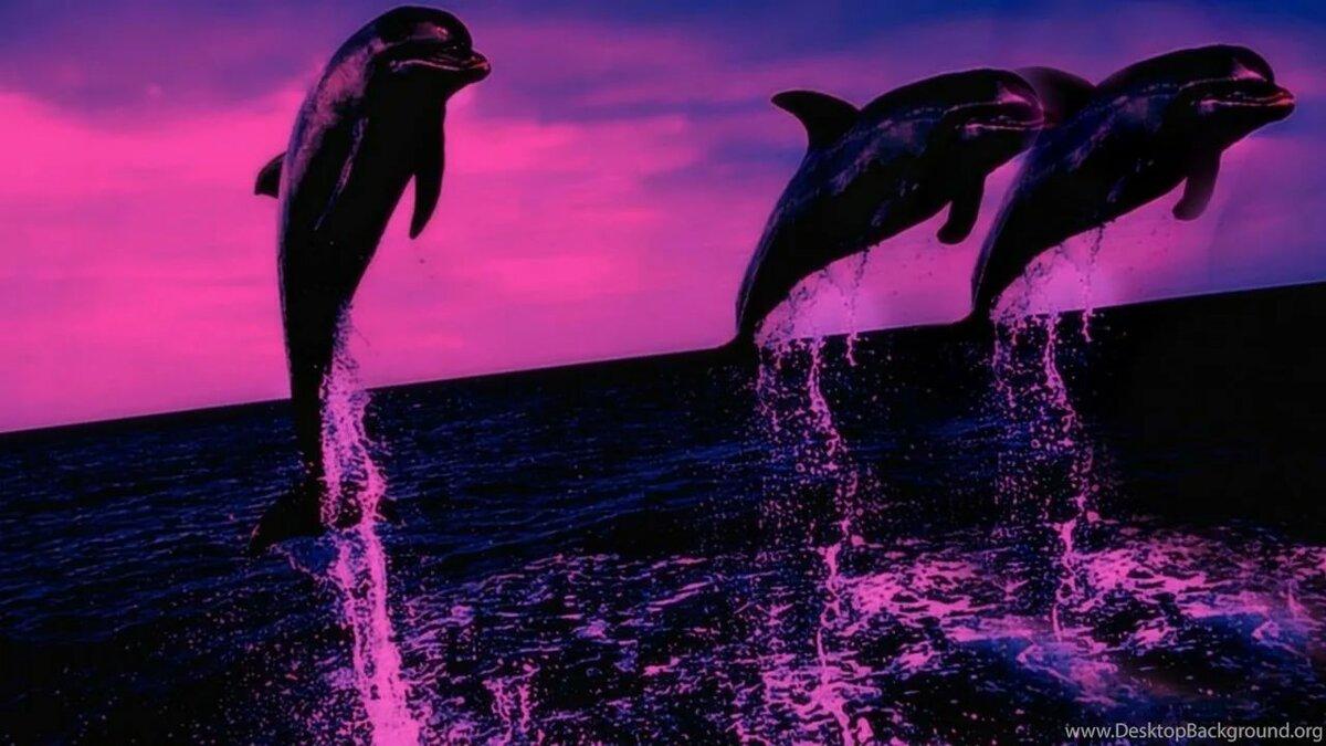 картинки с дельфинами на рабочий