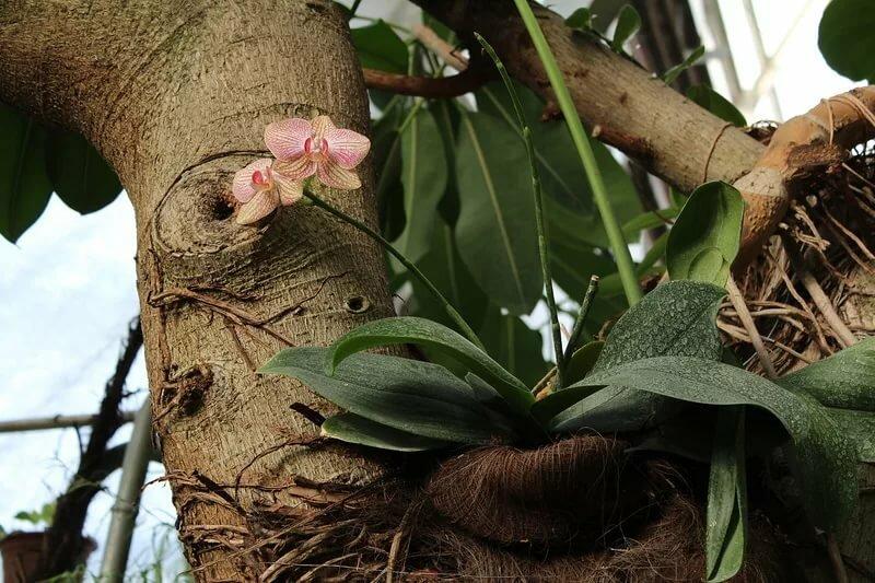 тенденции орхидеи в естественных условиях фото желающий