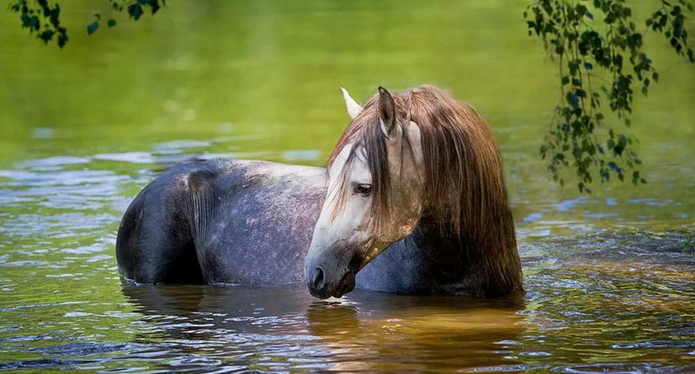 озеро конь в картинках свадьбой моложенам