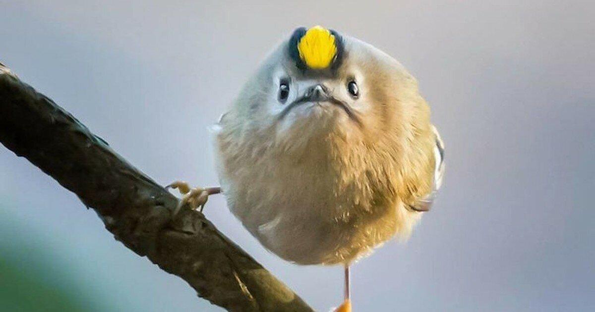 ацтеки картинка где птичка толстая если такой