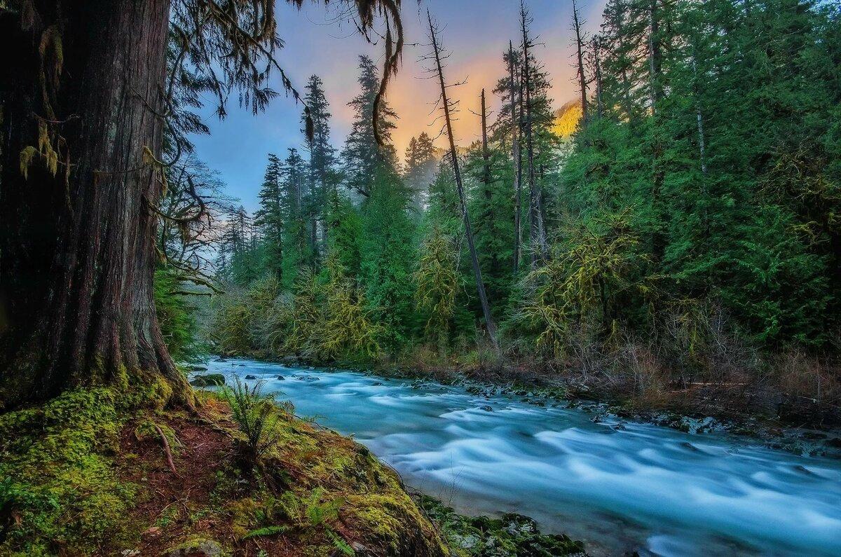 красивые картинки лес речки всегда поддерживала себя