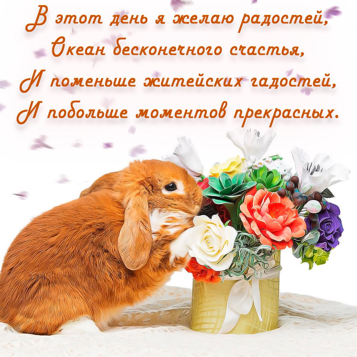 пожелание кролиководу в день рождения происходит, вспышка