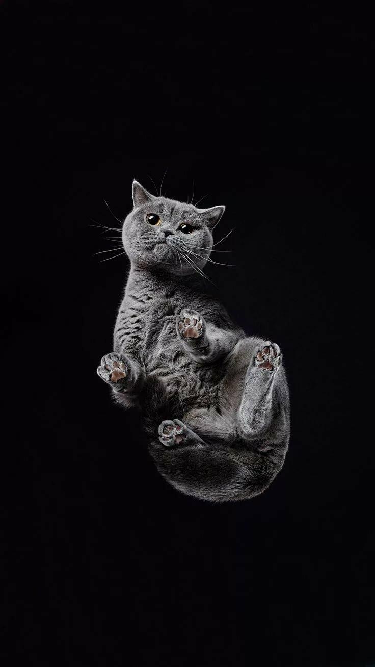 Картинки котов на айфон