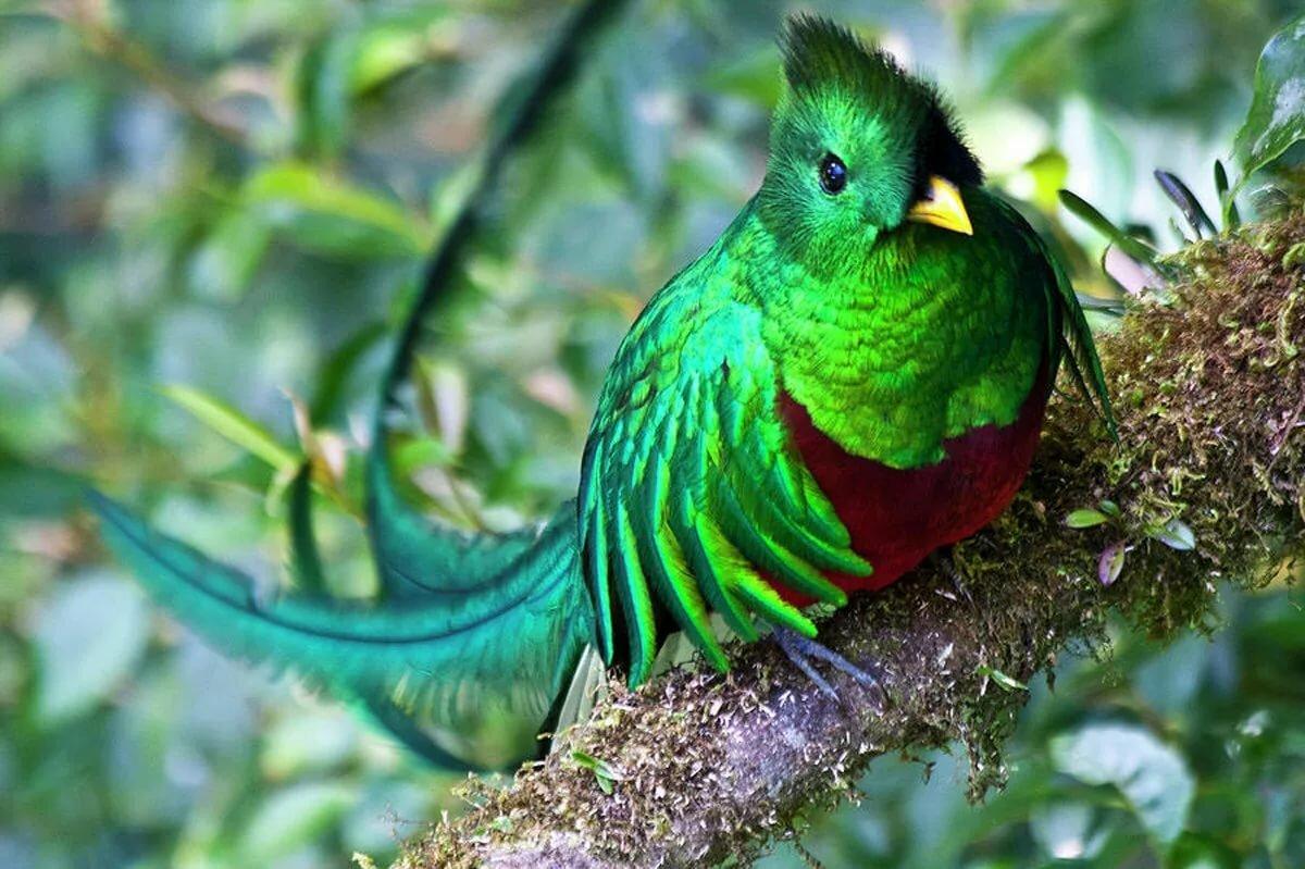элементом необычные птицы мира с описанием с картинками занимаюсь декупажем профессионал