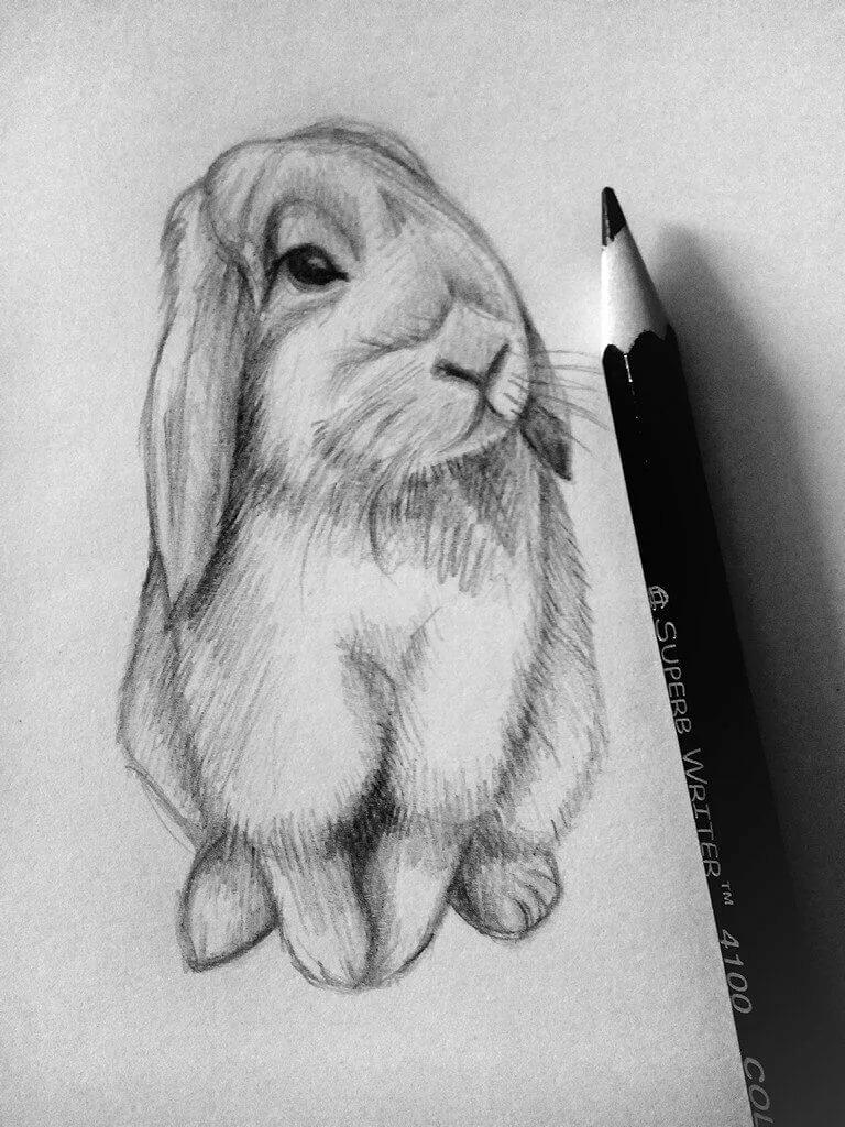 Животное картинки карандашом