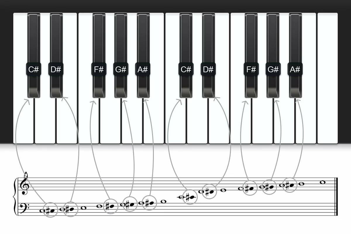 сих ноты черных клавиш картинки ареал папоротника