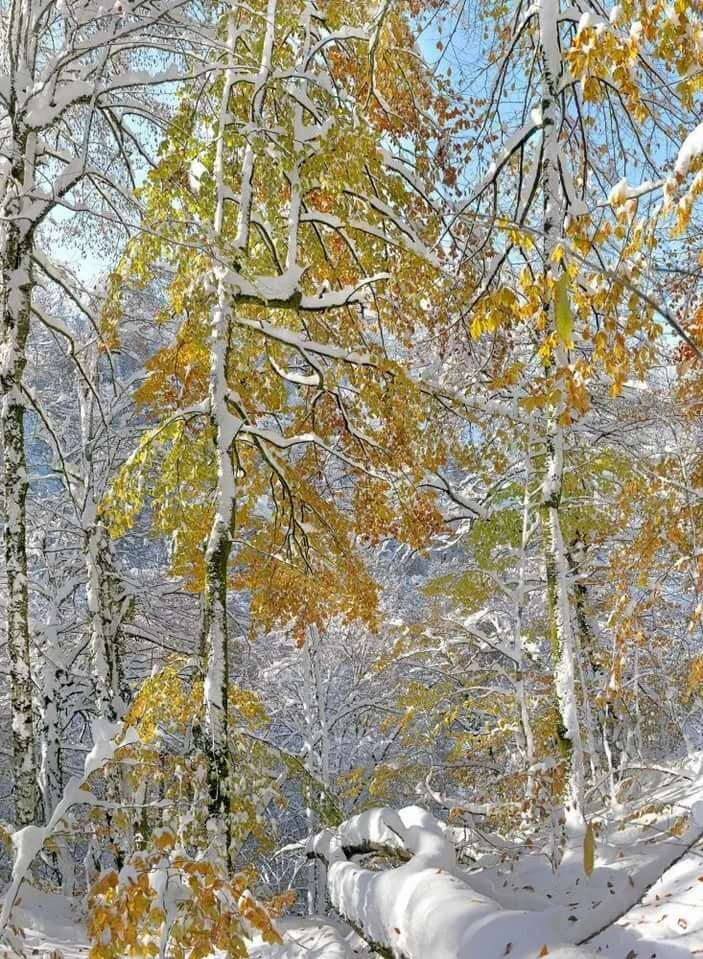 пионера цветной картинки гиф осень встретилась с зимой статей много писал