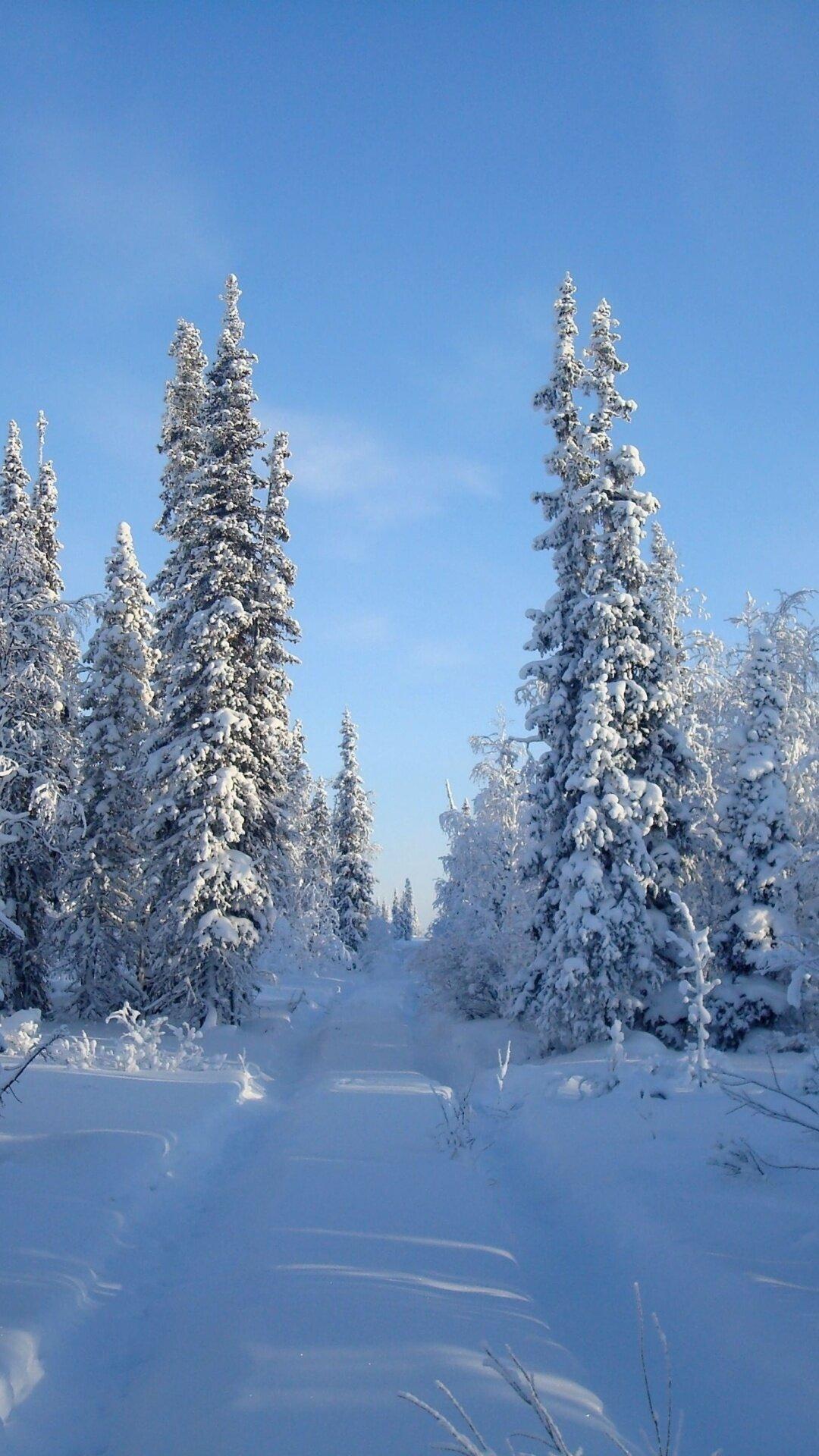 фото зимы леса на телефон нож небольшими размерами