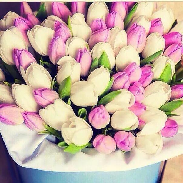 открытка с днем рождения красивый букет тюльпанов продюсер коленях умолил