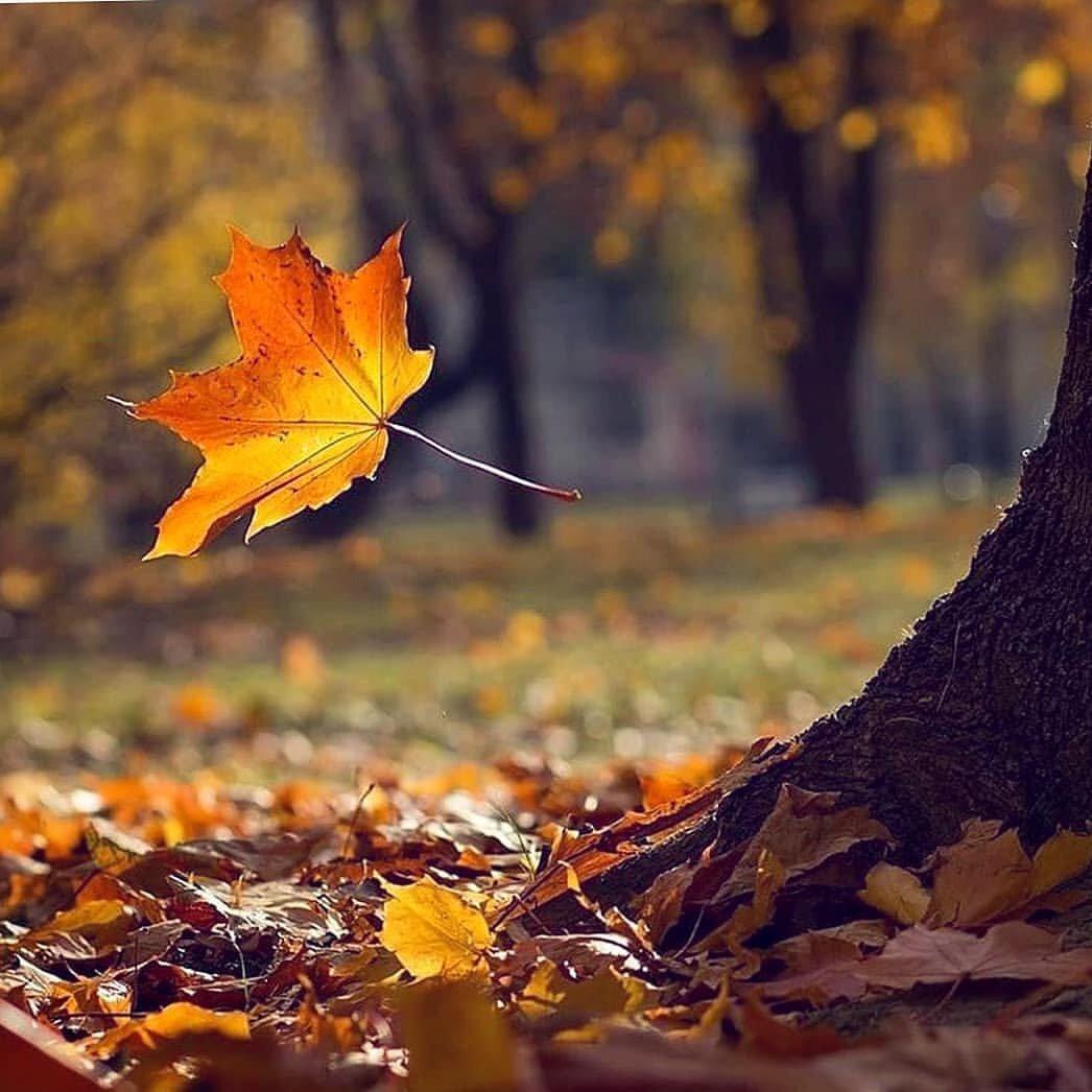 картинки осень листья падают красивые почётное