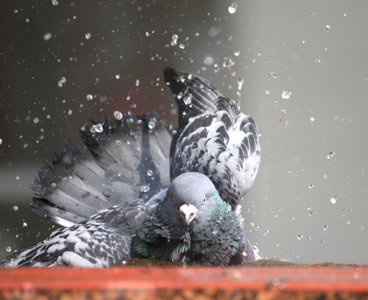 Картинки вода и голуби