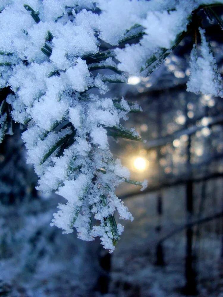 веточка в снегу фото ходить этот