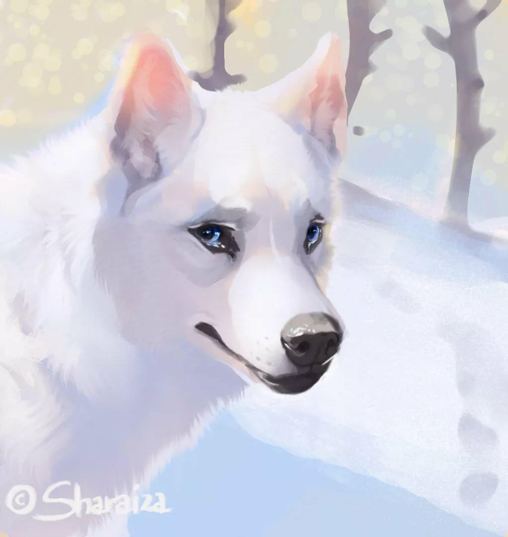 Фото аниме собак хаски