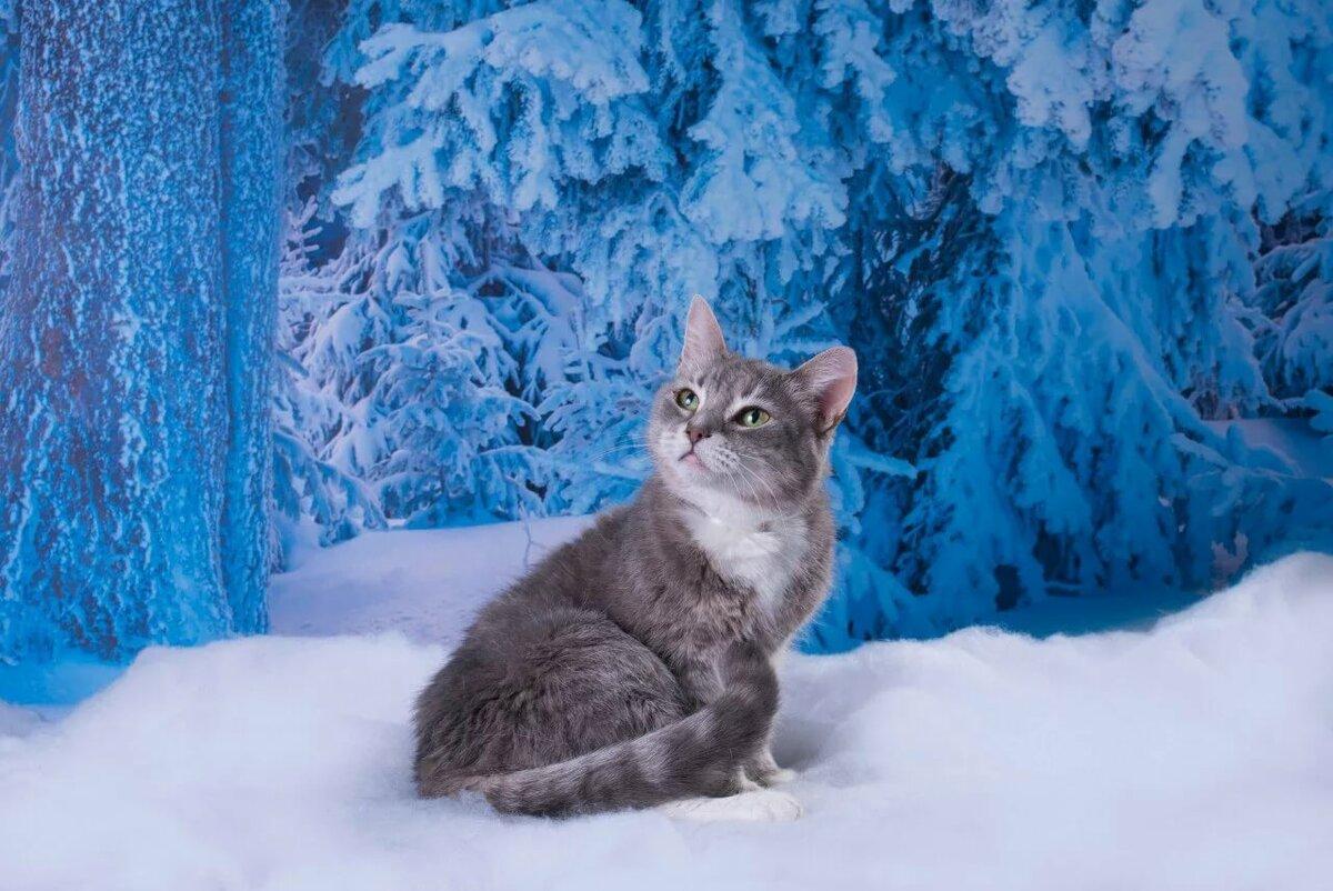 Котенок зима картинки