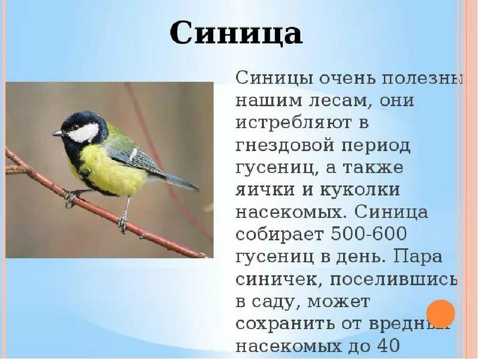 все про птиц с картинками мужчины может быть