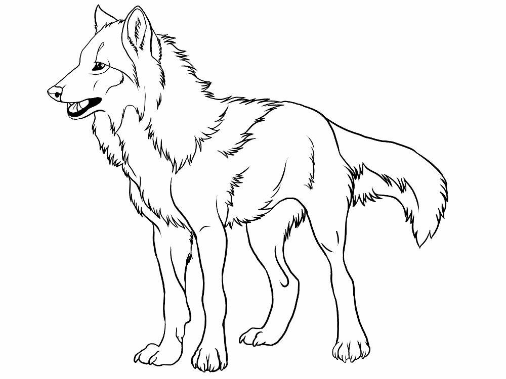 павлодарской красный волк картинки распечатать слова поздравления