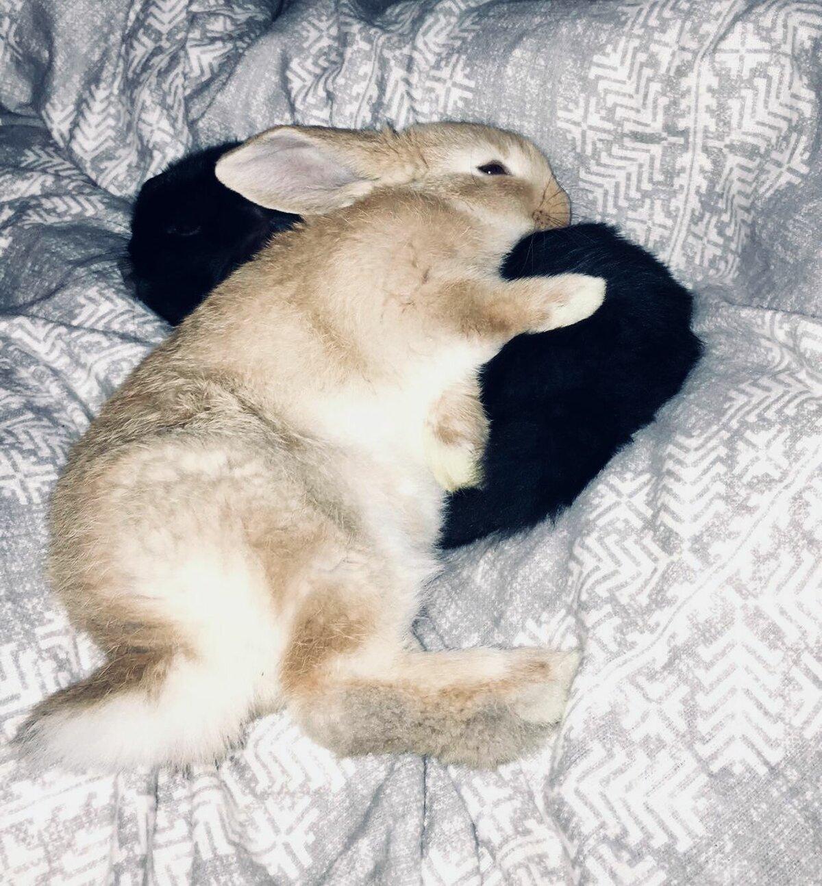 картинка сплю зайчик без коментариев автора