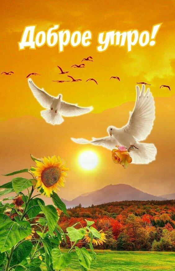 Сообщество создано для тех кто хочет пожелать Доброе Утро своим родным и близким:3
