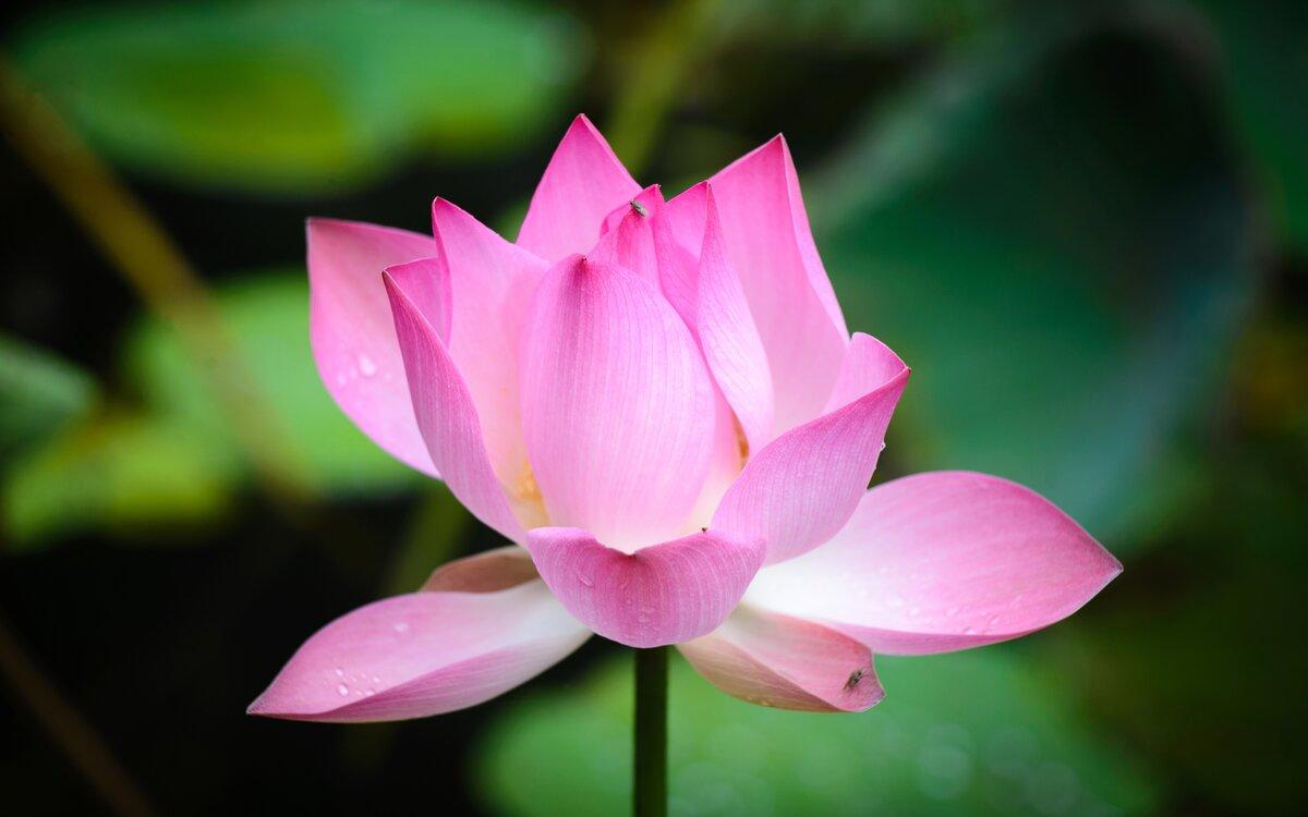 эту красивые цветы фото по одному цветку помните, что