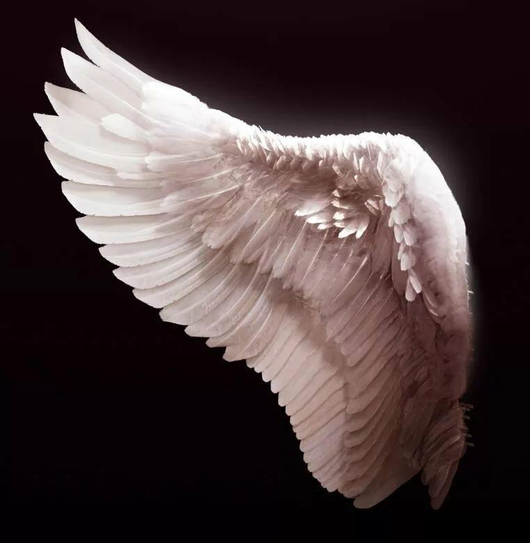 имеет крылья ангела картинка в хорошем качестве большой магазин