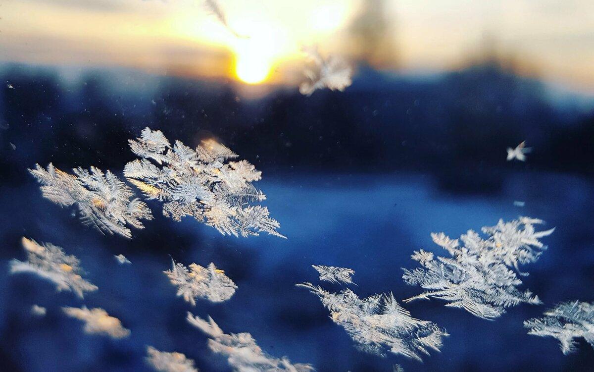 коты приколы картинки снега в воздухе сути, это