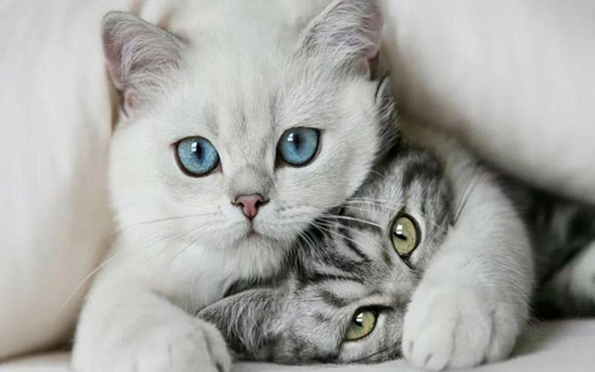 ты мое счастье с голубыми глазами картинки